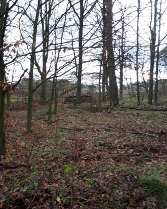 Sellendorf, bewaldetes Grundstück